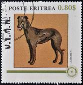 ERITREA - CIRCA 1984: A stamp printed in Eritrea shows a dog, lurcher, circa 1984 — Stock Photo