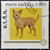 ERITREA - CIRCA 1984: A stamp printed in Eritrea shows a dog, chihuahua, circa 1984 — Stock Photo