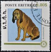ERITREA - CIRCA 1984: A stamp printed in Eritrea shows a dog, bloodhound, circa 1984 — Stock Photo