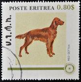 ERITREA - CIRCA 1984: A stamp printed in Eritrea shows a dog, red setteh, circa 1984 — Stock Photo