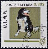 ERITREA - CIRCA 1984: A stamp printed in Eritrea shows a dog, bordier collie, circa 1984 — Stock Photo