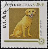 ERITREA - CIRCA 1984: A stamp printed in Eritrea shows a dog, golden labrador, circa 1984 — Stock Photo