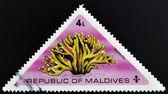 MALDIVE ISLANDS CIRCA 1975: stamp printed in Maldive Islands shows Coral, stylotella, circa 1975 — Stock Photo