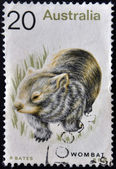 AUSTRALIA - CIRCA 1990: A stamp printed in Australia shows image of a Wombat, circa 1990 — Stock Photo