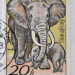 CZECHOSLOVAKIA - CIRCA 1976: A stamp printed in Czechoslovakia, shows Elephants, circa 1976 — Stock Photo