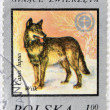 POLAND - CIRCA 1977: A Stamp printed in Poland shows image of a Wolf and Wildlife Fund Emblem with the description Canis lupus, circa 1977 - Stock Photo