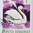 ROMANIA - CIRCA 1977: A stamp printed in Romania show Mute swan, circa 1977. — Stock Photo #21831879