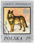 POLAND - CIRCA 1977: A Stamp printed in Poland shows image of a Wolf and Wildlife Fund Emblem with the description Canis lupus, circa 1977 — Stock Photo