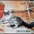 Stock Photo: CUB- CIRC2007: stamp printed in Cubshows domestic cat, circ2007