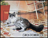Kuba - circa 2007: eine briefmarke gedruckt in kuba zeigt, hauskatze, ca. 2007 — Stockfoto