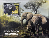 CUBA - CIRCA 2008: A stamp printed in Cuba dedicated to the Havana Zoo, shows a elephant maximus, loxodonta africana, circa 1995 — Stock Photo