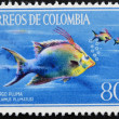 COLOMBIA - CIRCA 1970: Stamp printed in Colombia shows Pargo Pluma, lachnolaimus plumatus, circa 1970 — Stock Photo