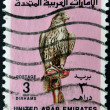 UNITED ARAB EMIRATES - CIRCA 1987: A stamp printed in the United Arab Emirates (UAE) shows image of a bird of prey, circa 1987  — Stock Photo