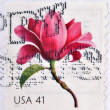 Stock Photo: UNITED STATES OF AMERICA - CIRCA 2007: A stamp printed in USA shows beautiful blossom, Magnolia, circa 200