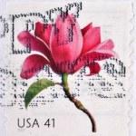 UNITED STATES OF AMERICA - CIRCA 2007: A stamp printed in USA shows beautiful blossom, Magnolia, circa 200 — Stock Photo #23141218