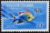 Kolumbien - circa 1970: briefmarke gedruckt in kolumbien zeigt pargo pluma, lachnolaimus plumatus, circa 1970 — Stockfoto
