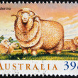AUSTRALIA - CIRCA 1989: A Stamp printed in Australia shows the Merino, circa 1989 — Stock Photo