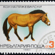 BULGARIA - CIRCA 1980: A stamp printed in Bulgaria shows Przewalski's Horse, circa 1980 — Stock Photo