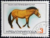 Bulgarien - circa 1980: eine briefmarke, gedruckt in bulgarien zeigt przewalski pferd, ca. 1980 — Stockfoto