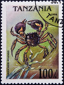 TANZANIA - CIRCA 1994: A stamp printed in Tanzania shows image of an Chinese mitten crab, Eriocheir sinensis , circa 1994 — Stock Photo