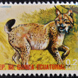 EQUATORIAL GUINEA - CIRCA 1974: Stamp printed in Guinea dedicated to endangered animals, shows lynx, Europe,  circa 1974 — Stok fotoğraf