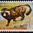 EQUATORIAL GUINEA - CIRCA 1974: Stamp printed in Guinea dedicated to endangered animals, shows Raccoon dog, Europe,  circa 1974 — Stok fotoğraf