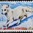 EQUATORIAL GUINEA - CIRCA 1974: Stamp printed in Guinea dedicated to endangered animals, shows Arctic fox, North America,  circa 1974 — Stock Photo