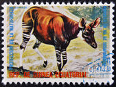 EQUATORIAL GUINEA - CIRCA 1974: Stamp printed in Guinea dedicated to endangered animals, shows Okapi, Africa, circa 1974 — Stock Photo