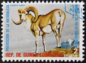 EQUATORIAL GUINEA - CIRCA 1974: Stamp printed in Guinea dedicated to endangered animals, shows Argali, Asia, circa 1974 — Stock Photo