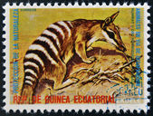 EQUATORIAL GUINEA - CIRCA 1974: Stamp printed in Guinea dedicated to endangered animals, shows numbat, Australia, circa 1974 — Stock Photo