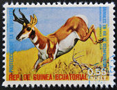 EQUATORIAL GUINEA - CIRCA 1974: Stamp printed in Guinea dedicated to endangered animals, shows Pronghorn, South America, circa 1974 — Stock Photo