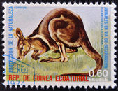 EQUATORIAL GUINEA - CIRCA 1974: Stamp printed in Guinea dedicated to endangered animals, shows Wallaby, Australia, circa 1974 — Stock Photo