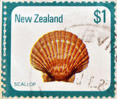 NEW ZEALAND - CIRCA 1979: a stamp printed in New Zealand shows image of a scallop (pecten novaezelandiae), circa 1979 — Stock Photo
