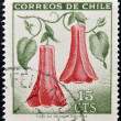 CHILE - CIRCA 1968: Stamp printed in Chile shows Lapageria, Chilean bellflower or copihue, circa 1968 — Stock Photo #25483901