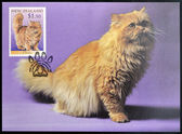 NEW ZEALAND - CIRCA 1998: stamp printed in New Zealand shows Domestic Cat, Persian, circa 1998 — Stock Photo