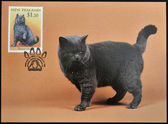 NEW ZEALAND - CIRCA 1998: stamp printed in New Zealand shows Domestic Cat, British Black, circa 1998 — Stock Photo