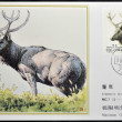 Stock Photo: CHINA - CIRCA 1988: A stamp printed in China shows elk Pere David's deer, Elaphodus davidianus , circa 1988