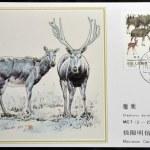 CHINA - CIRCA 1988: A stamp printed in China shows elk Pere David's deer, Elaphodus davidianus , circa 1988 — Stock Photo