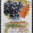 Stock Photo: HUNGARY - CIRC1990: stamp printed in Hungary shows Cabernet Franc Grapes, Hajos-Vaskut, circ1990
