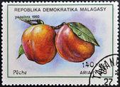Republica malgache - circa 1992 : un timbre imprimé en madagascar montre peaches, prunus persica, fruits, circa 1992 — Photo