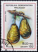 REPUBLICA MALAGASY - CIRCA 1992: A stamp printed in Madagascar shows Avocados, Persea Americana, Fruit, circa 1992 — Stock Photo