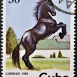CUBA - CIRCA 1981: A stamp printed in Cuba shows a horse, circa 1981 — Photo