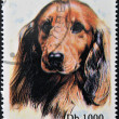 SAO TOME AND PRINCIPE - CIRCA 1995: A stamp printed in Sao Tome shows a dog, circa 1995 — Stock Photo