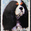 SAO TOME AND PRINCIPE - CIRCA 1995: A stamp printed in Sao Tome shows a dog, circa 1995 — Stock Photo #27577627