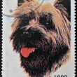 SAO TOME AND PRINCIPE - CIRCA 1995: A stamp printed in Sao Tome shows a dog, circa 1995 — Stock Photo #27577647