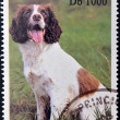 Stok fotoğraf: SAO TOME AND PRINCIPE - CIRC1995: stamp printed in Sao Tome shows dog, circ1995