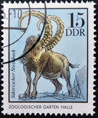 GERMANY - CIRCA 1975: A Stamp printed in GDR shows Siberian Chamois, Halle, German Zoological Gardens, circa 1975 — Stock Photo