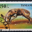 TANZANIA - CIRCA 1995: A stamp printed in Tanzania shows Lycaon pictus, circa 1995 — Stock Photo