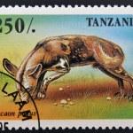 TANZANIA - CIRCA 1995: A stamp printed in Tanzania shows Lycaon pictus, circa 1995 — Stock Photo #28902705
