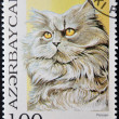 AZERBAIJAN - CIRCA 1995: A stamp printed in Azerbaijan shows cat, persian, circa 1995 — Stock Photo
